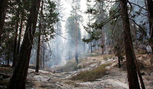 Treesandsmoke