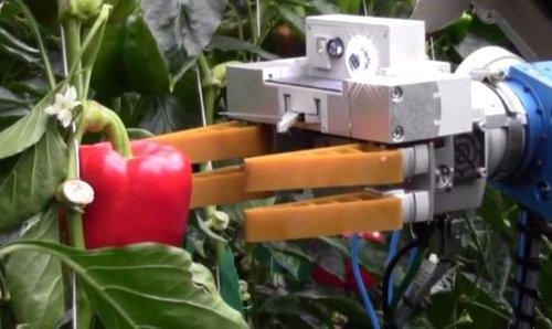 Robothandpickspepper